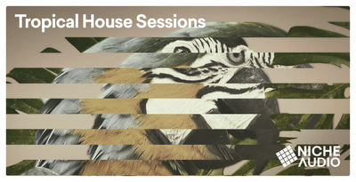 Niche samples sounds modern tropical house sessions 1000 x 512 new